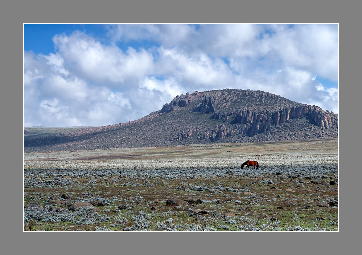 A lone horse grazing on the plains