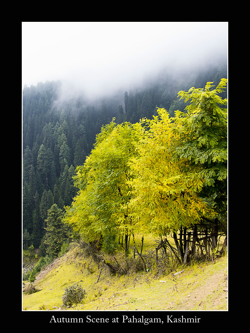 Trees in autumn colors, Betaab Valley