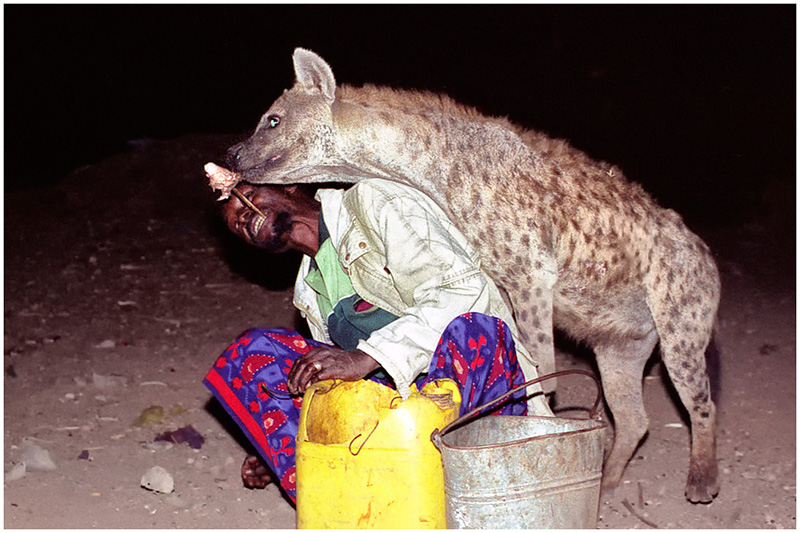 Feeding Wild Hyenas Mouth to Mouth in Harar