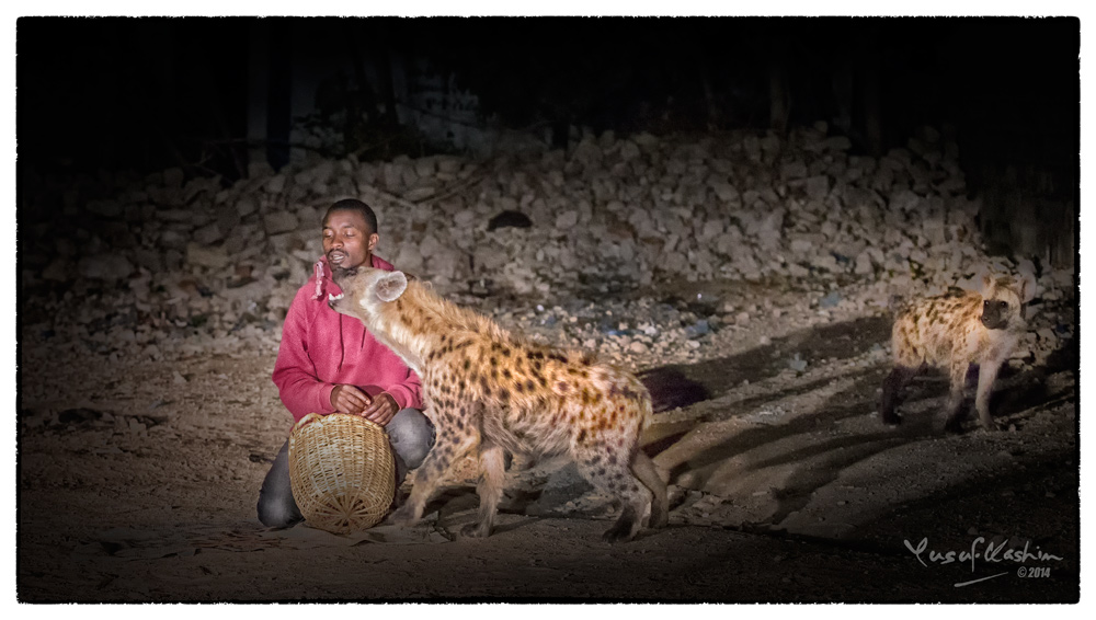 The Hyena Man fed the Hyenas with meat on a short stick held by his own teeth.