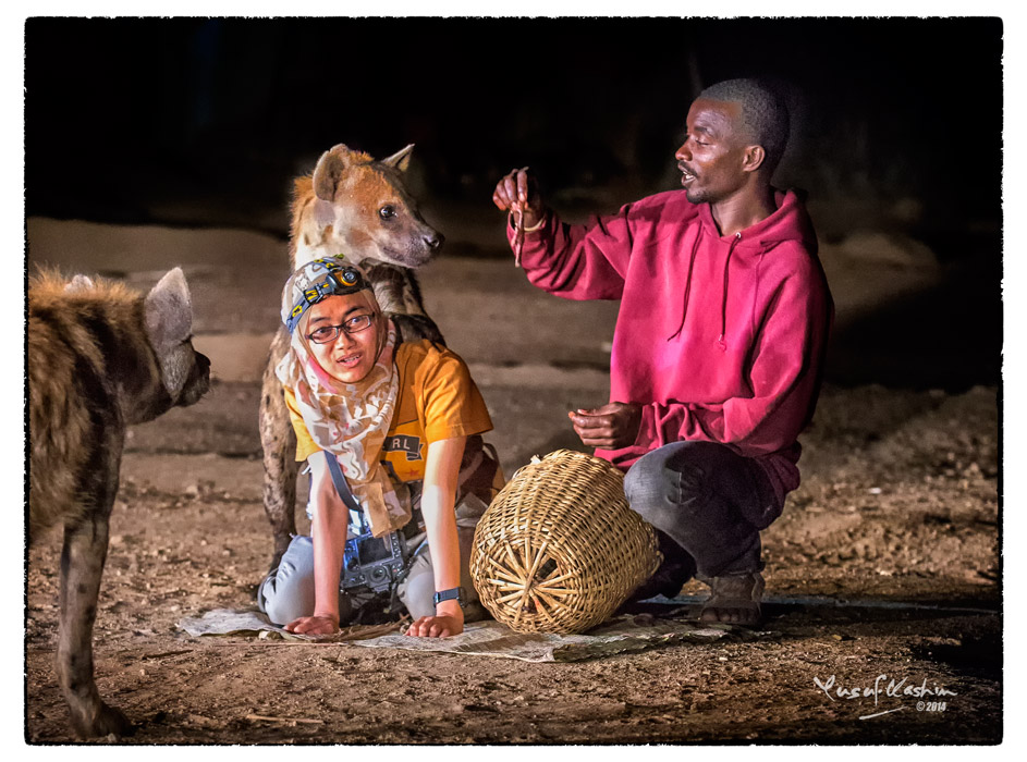 A Hyena propped himself on sally's shoulders to get at a piece of meat offered by the Hyena Man …