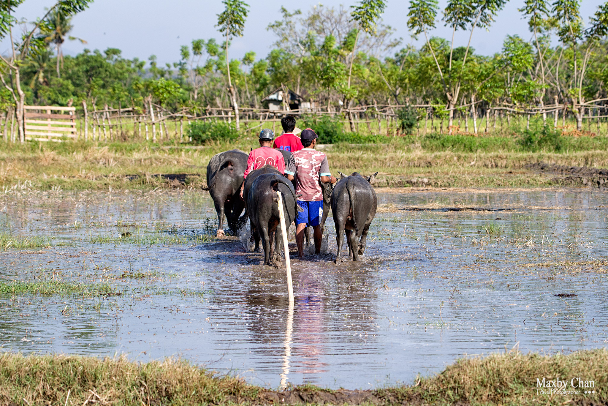 "A stick or ""Sakar"" was inserted into the ground by the village elder. The objective of the race is to guide a pair of racing bulls to hit the sakar. Any race that fails to do so is disqualified."